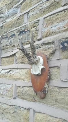 Small Antique Vintage Wall Mounted Deer Roe Antlers 3 Point Taxidermy Wooden by LuxeandBear on Etsy