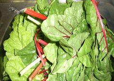 Mangold főzelék (ahogy mi szeretjük) Lettuce, Spinach, Vegetables, Recipes, Food, Diet, Recipies, Essen, Vegetable Recipes