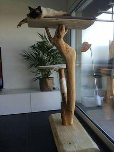 Arbre à chat en bois flotté...