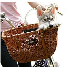 this is such an adorable pic! I so want to put my puppy in front of my bike, altho i would be really nervous about his safety!