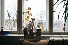 ArtBanana náhlíží do ateliérů: Matěj Olmer Online Galerie, Contemporary, Dogs, Artist, Animals, Atelier, Animales, Animaux, Pet Dogs