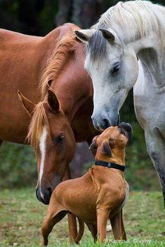 Ackenheil Anwaltskanzlei Die Tierrechtskanzlei - bundesweit PFERDERECHT HUNDERECHT http://www.tierrechtskanzlei.de