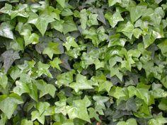 plantas-que-reducen-el-calor-de-las-paredes-05