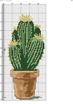 Cactuses 1