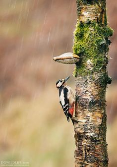 Shelter from the rain by Giedrius Stakauskas on 500px