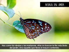 Acerca del amor  Haz como las abejas y las mariposas, ellas no buscan la flor más linda del jardín, sino aquella que tiene...