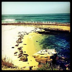"Seal Beach, La Jolla--used to be the  ""Childrens Pool"".  For many years there has been an ongoing battle, as to who  the beach should belong to."