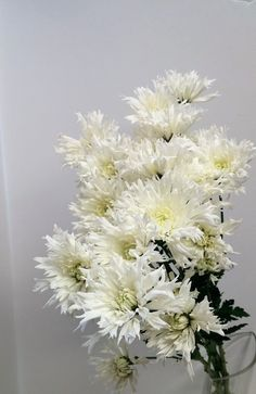 Snowflake white daisy.  winter flowers,  perfect for winter arrangements