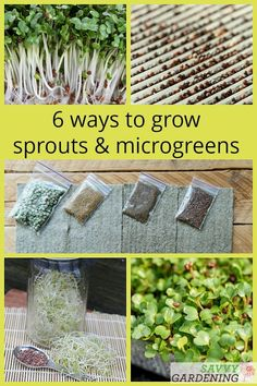 Outdoor Garden Landscaping These 6 simple methods are a great way to grow food year-round. Growing sprouts and microgreens offers a taste of the garden even during the winter months. Growing Sprouts, Growing Microgreens, Growing Seeds, Growing Broccoli, Growing Vegetables, Regrow Vegetables, Organic Gardening, Gardening Tips, Kitchen Gardening