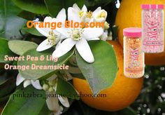 Pink Zebra Custom Recipe ORANGE BLOSSOM Mix Orange Dreamsicle & Sweet Pea and Lily. The sweet smell of the orange blossom on the tree is truly a sweet, orangey & floral smell that is like none other! email for a sample pinkzebra_jeanne@yahoo.com click to order your sprinkles here