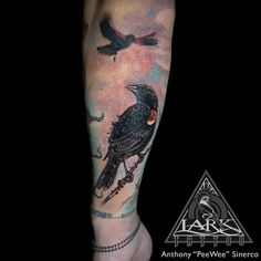 #LarkTattoo #PeeWee #PeeWeeLarkTattoo #AnthonyPeeWeeSinerco #AnthonySinerco #Tattoo #Tattoos #Bird #BirdTattoo #Animal #AnimalTattoo #Nature #NatureTattoo #RedWingedBlackbird #RedWingedBlackbirdTattoo #Blackbird #BlackbirdTattoo #AgelaiusPhoeniceus #AgelaiusPhoeniceusTattoo #ColorTattoo #TattooArtist #Tattoist #Tattooer #LongIslandTattooArtist #LongIslandTattooer #LongIslandTattoo #TattooOfTheDay #LarkTattooWestbury #Westbury #LongIsland #Tat #Tats #Tatts #Tatted #Inked #Ink #TattooInk