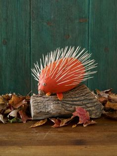 Playful Porcupine