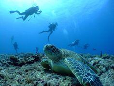 ウミガメ/沖縄・宮古島ダイビングサービス Fish a go go  !|あそびゅー!スキューバダイビング