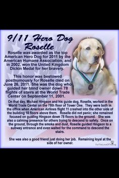 Roselle, Dog, Hero, dogs of Dog Love, Puppy Love, Military Working Dogs, Dog Stories, Search And Rescue, September 11, We Remember, Service Dogs, Animals