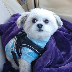 travel tip driving Thinking of going on a road trip, check out my post for some awesome tips for you and your pets My little dog Sunny loves going on road trips with me Big Fluffy Blanket, Famous Shop, Famous Beaches, Love Is Gone, Historical Monuments, Beaches In The World, Modern City, Little Dogs, Pilgrim