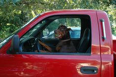 Post with 182 views. My girl wanted to be introduced to you. Funny Dogs, Funny Animals, Pincher Dog, Doberman Love, Kinds Of Dogs, Dog Rules, Doberman Pinscher, Dog Paws, Cute Faces
