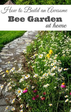 How to Build a Bee Garden at Home - We need bees and other pollinators and they need us. Really great tips and practical things you can add to your own garden that will help feed and help  bees. Tips include; what to plant, natural predators, build a bee bath and much more. | Bee Garden | Gardening with Kids |