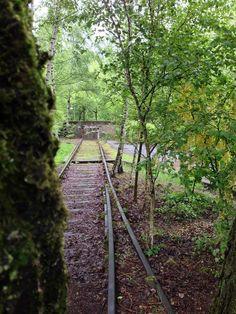 Inspirasjon - vegetasjon. Bjørkeskog ved jernbaneskinnene. Foto fra Landschaftpark Duisburg-Nord