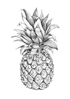 Images for > pineapple graphic design Pineapple Sketch, Pineapple Drawing, Pineapple Art, Pineapple Clipart, Pineapple Ideas, Pineapple Design, Cool Drawings, Drawing Sketches, Pencil Drawings