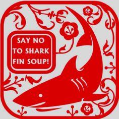 Shark fin soup :0(