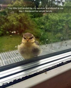 This little bird landed by my window and stared at me like I murdered his whole family.