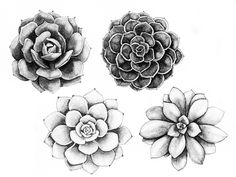 Trendy Ideas For Succulent Tattoo Ideas Posts Piercing Tattoo, Arm Tattoo, Body Art Tattoos, Tattoo Drawings, Sleeve Tattoos, Cool Tattoos, Tattoo Bird, Flower Drawings, Cactus Tatoo