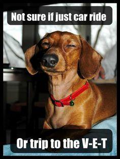 Suspicious Wiener Dog...