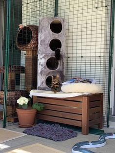 Outdoor Cat Enclosure, Outdoor Cats, Outdoor Furniture, Outdoor Decor, Home Decor, Decoration Home, Room Decor, Home Interior Design, Backyard Furniture