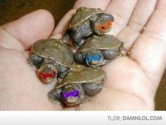 Not only do I LOVE tiny things but growing up I LOVED The Teenage  Mutant Ninja Turtles!!! This is awesome!!