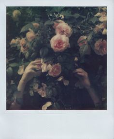 Marie Zucker photography #polaroid