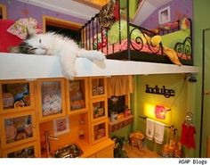 I like cats so ther has to be a cat room.