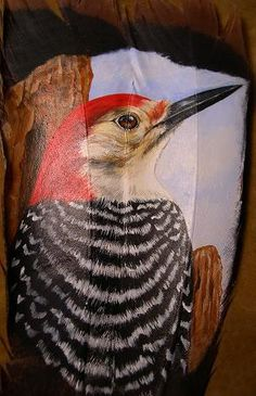 Red-Bellied Woodpecker by Gail Savage