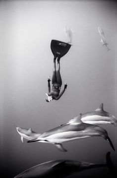 Wayne Levin, Freediver and Spinner Dolphins