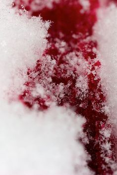 Blood on snow. Red on white. In all it's cruelty it looked beautiful.