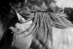 photo noir et blanc, cheval - Pesquisa Google