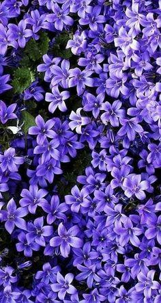 purple flowers wallpaper - Z - Plants