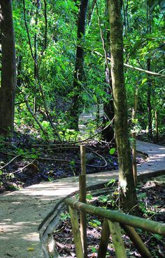 Waterfall trail in the Manuel Antonio National Park. The beaches are beautiful in the park but the trails and viewpoints are what make this park special. Especially with all the wildlife you run into along the way!