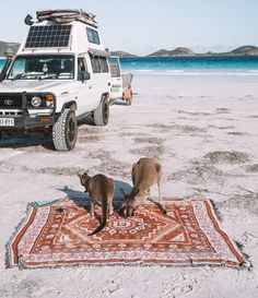 The locals enjoying the Phoenix Rug 🦘 Back in a couple weeks. So cute! Roadtrip Australia, Camping Holiday, Travel Aesthetic, Adventure Is Out There, Happy Campers, Van Life, Places To Travel, Road Trip, Gap Year