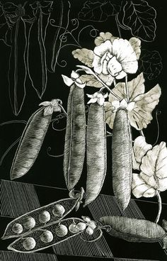 Peapods Art Print of Original Scraperboard by KayLeverton on Etsy Sweet Pea Flowers, Scratch Art, Pea Pods, All Craft, Sketching, Plant Leaves, Tattoo Ideas, Things To Come, Ink