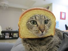 cat breading - if I do this to my dog the bread would be gone in 0.02 sec flat!