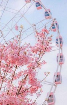 Pink Flower and Ferris Wheel wallpaper Pink Flower aesthetic and Ferris Wheel in beautiful garden. Pink Flower and Ferris Wheel wallpaper Pink Flower aesthetic and Ferris Wheel in beautiful garden. Frühling Wallpaper, Flower Phone Wallpaper, Cute Wallpaper Backgrounds, Pretty Wallpapers, Wallpaper Pink Cute, Iphone Spring Wallpaper, Cherry Blossom Wallpaper Iphone, Pastel Pink Wallpaper Iphone, Pink Walpaper