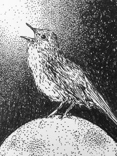 kim krans, drawing, bird