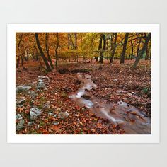 Creek in sycamore tree forest Art Print by kostaspavlis Forest Art, Tree Forest, From The Ground Up, Buy Frames, All Over The World, Printing Process, Gallery Wall, Country Roads, Art Prints