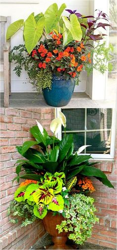 Showy, colorful and easy care shade plants and container gardens with vibrant foliage and flowers. 30+ designer plant lists to create gorgeous gardens with shade loving plants !
