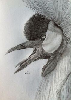 Crowned crane l graphite drawing l 2015-09-25 l ARTINT l mariellevanleeuwen@live.nl