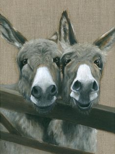 If you wonder what a donkey can eat, you can find all important feeding facts here. Take good care of your donkey with best information. Donkey Donkey, Baby Donkey, Cute Donkey, Mini Donkey, Baby Cows, Donkey Pics, Farm Animals, Animals And Pets, Cute Animals