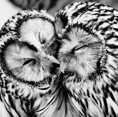 Make out owls?