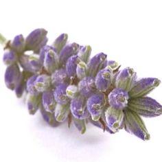 Herbal Remedies For Neuropathy