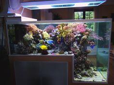 salt water aquarium | Philippe Grosjean's Inspiring Drop Off Reef