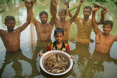 Solaiman Sheik shows off the harvest from his father's small pond near Khulna, Bangladesh: freshwater prawns, a profitable export. The family also raises fish in the pond and, in the dry season, rice fertilized by fish waste—a polyculture that has tripled output with little environmental downside. PHOTOGRAPH BY JIM RICHARDSON